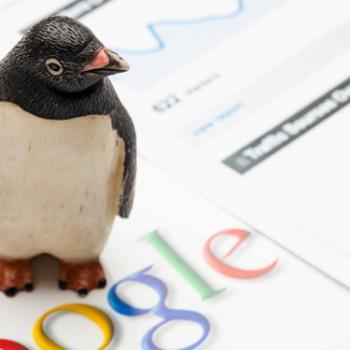 pinguin gogle image